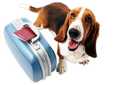 Importing Your Precious Pet Dogs & Cats in to Sri Lanka
